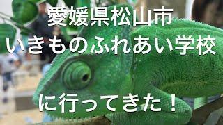 愛媛県松山市のジョープラ3階に動物と触れ合うことのできる「いきものふ...