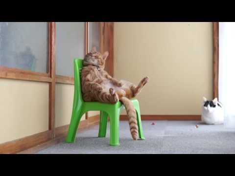 Thumbnail for Cat Video かご猫 x 椅子に座る猫 Cat sitting in a chair 2014#2