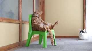 かご猫 x 椅子に座る猫 Cat sitting in a chair 2014#2