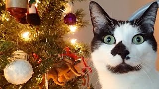 8 Signs Your Cat Believes in Santa