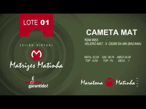 LOTE 01 Matrizes Matinha 2019