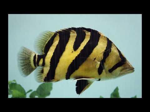 งาน บรรยายรูปภาพ 5อันดับ ปลาสวยงามที่่นิยยมเลี้ยงที่สุดในประเทศไทย