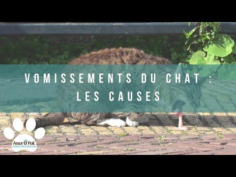 Mon Chat Vomit : Pourquoi ?  | Assur O'Poil