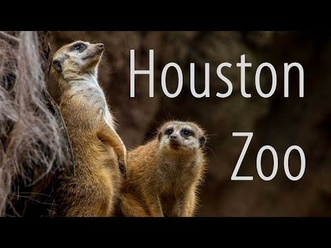See Texas' Houston Zoo - One of top 10 zoos in the US