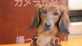 Yuria & Shizuka ユリアとしずちゃんは兎に角写りたがり!! □ホームペ...