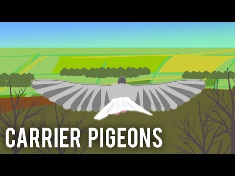Carrier Pigeons World War I