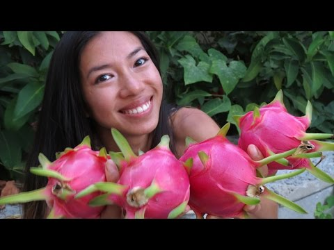 How to Pick and Eat a Dragon Fruit