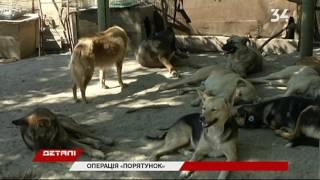 Зачем бездомных собак вывозят в Харьков