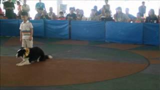 Dog Training Singapore - Isaac First Skc Demo