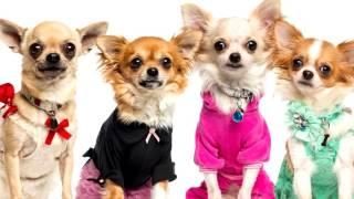 Одежда для собак интернет магазин дешево!