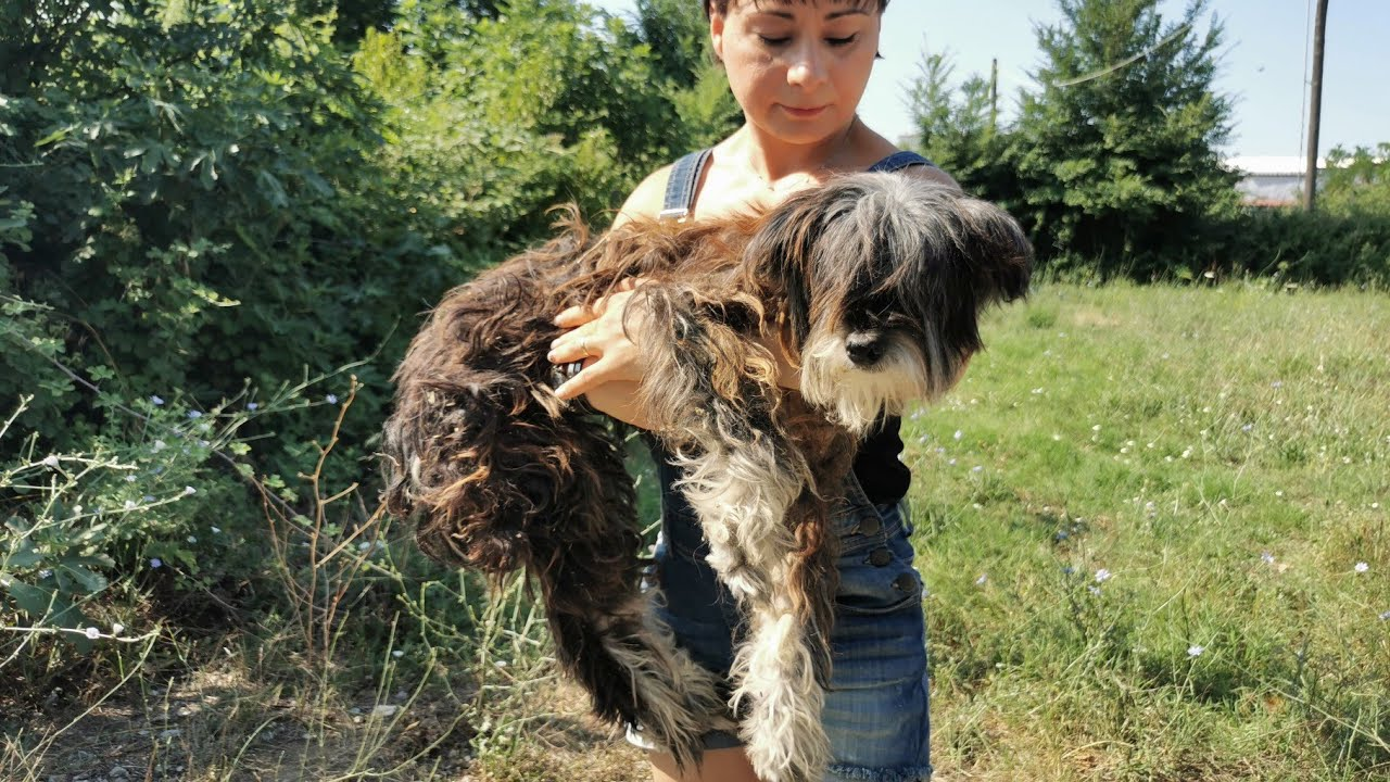 Rescue of an elderly dog, deaf and blind that found as a stray.