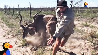 Brave Guy Rescues Kudu in Dangerous Wild Animal Rescue | The Dodo