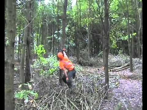 Matthew Allen: Forestry Contractor and Tree surgeon
