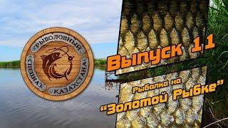 #11. Ловля Толстолобика. Озеро Золотая Рыбка. Рыбалка в Алматы.