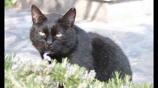 Rossini: Duetto buffo di due gatti (Comic Duet for Two Cats) - Mullerova; Chadima; Caramella