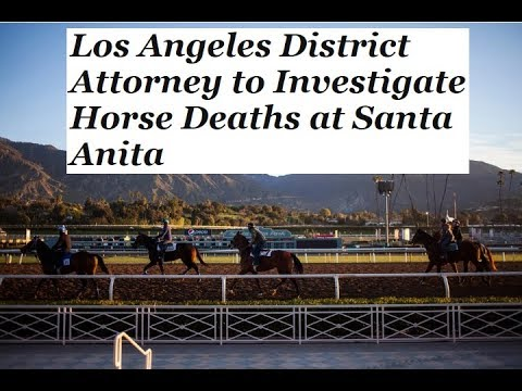 California Horse Racing Deaths - The Abuse Of Horse In The Racing Industry