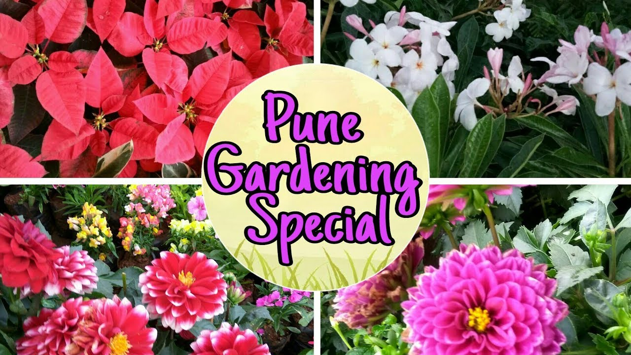 Pune Nursery Visit Near Airport Area Beautiful Flowers Plants Part 1