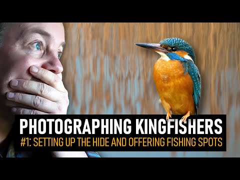 Photographing A PAIR Of KINGFISHERS | #1: Setting Up The Hide And Fishing Spots