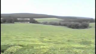 43 - John Goldie examining a tea plantation in Kenya.