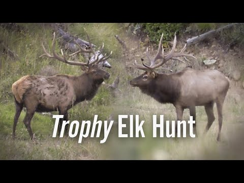 BIG Bulls! Elk Hunting Colorado – Eastmans' Hunting TV