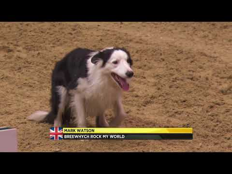 The Kennel Club Large Senior Dog Agility Finals at Olympia 2017
