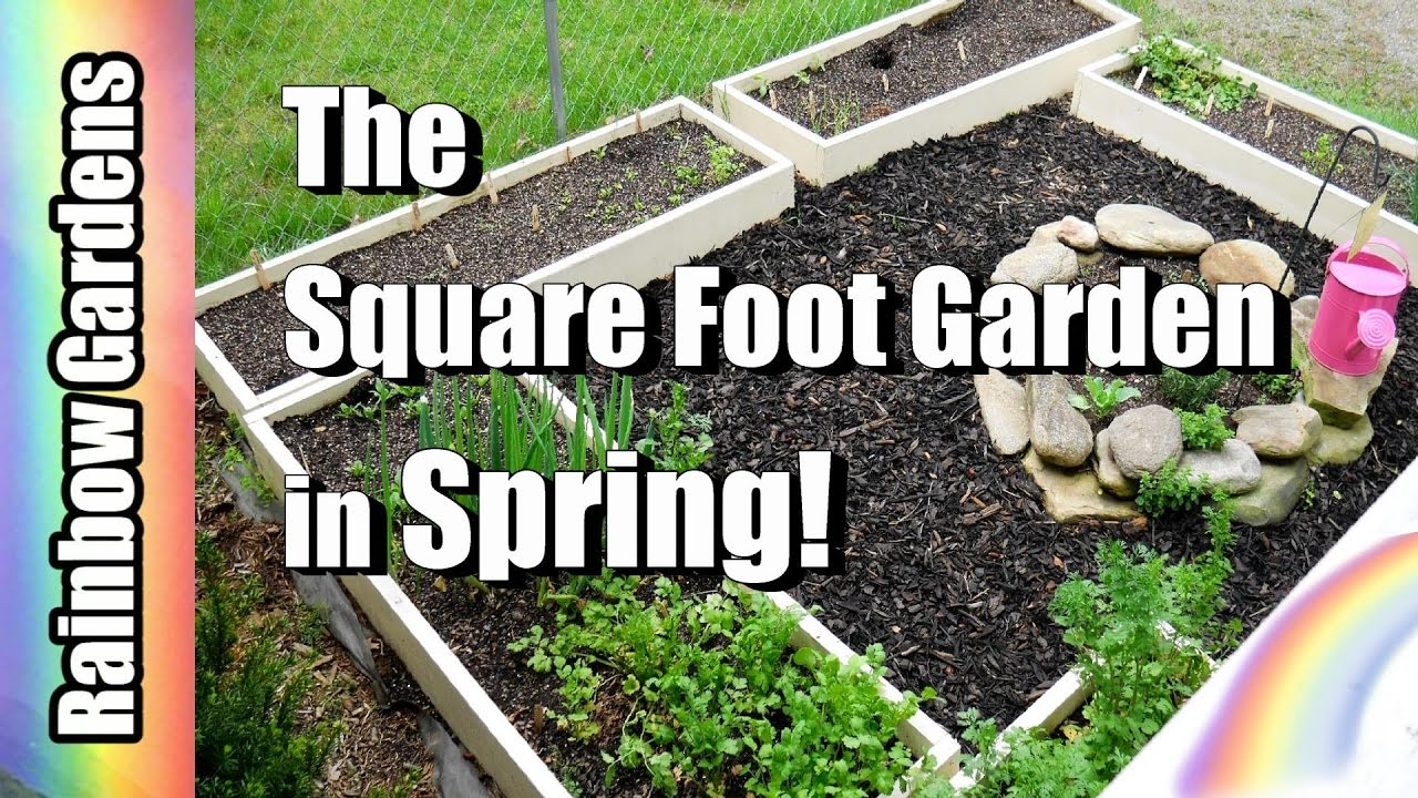 The Square Foot Garden In Spring! Hereu0027s Whatu0027s Growing, Harvest, And  Succession Planting