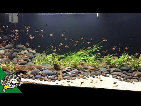 The fish in the 800 gallon are going CRAZY!
