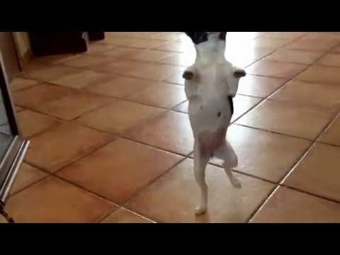 funny cats dancing || youtube||
