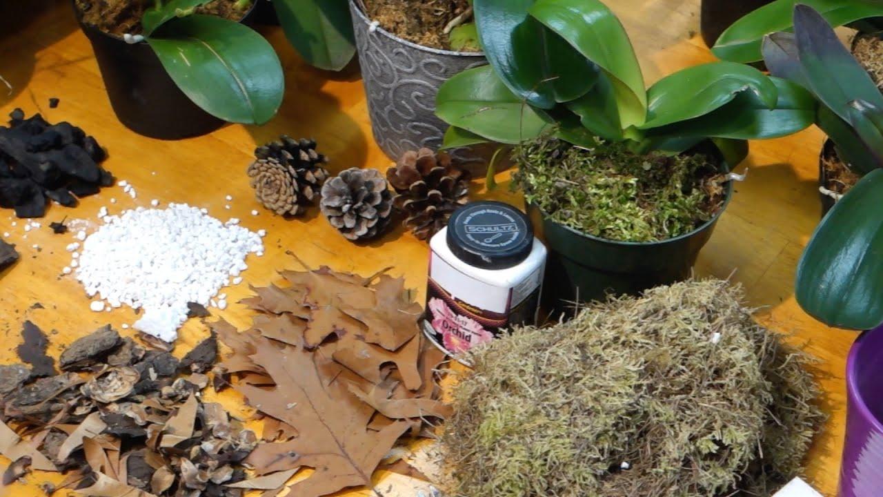Как приготовить грунт для орхидеи в домашних условиях видео