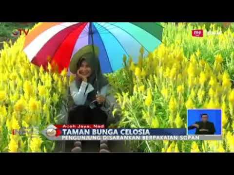 Tempat Wisata Taman Bunga Baru Celocia Aceh Jaya Youtube