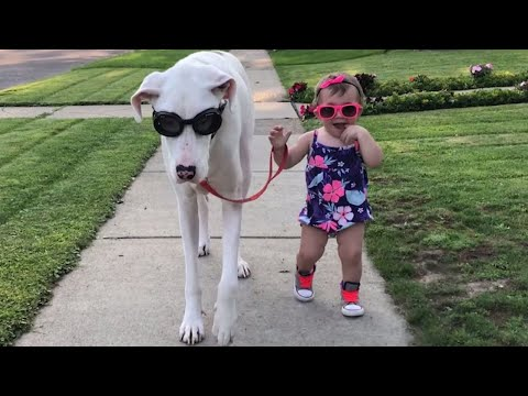 Toddler and Deaf Great Dane Share an Adorable Friendship