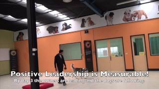 Alpha Dog Training Australia - 4 Day Fast-track Course