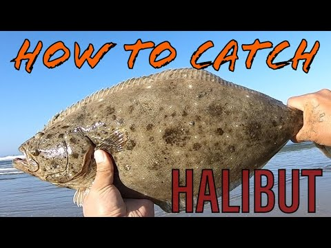 How To Catch HALIBUT Surf Fishing In Socal