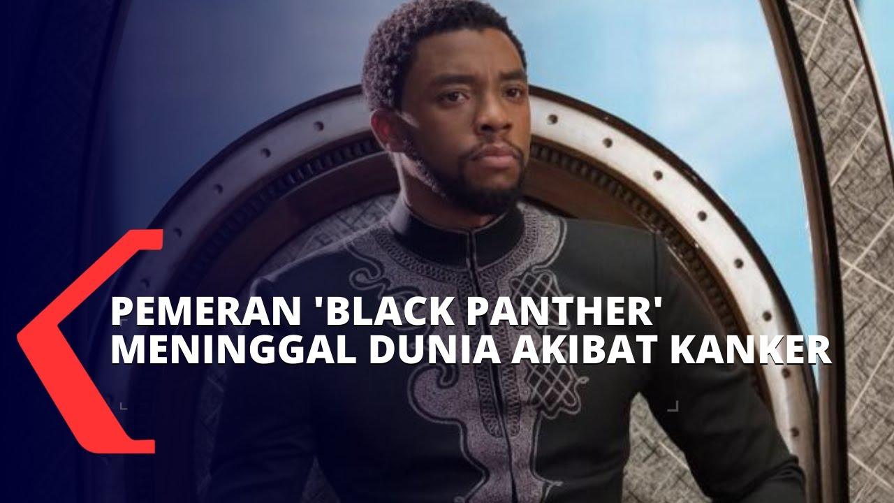 Mengidap Kanker Usus Stadium 4, Pemeran Black Panther ...