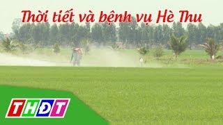 Thời tiết và bệnh vụ Hè thu | Khuyến nông | THDT