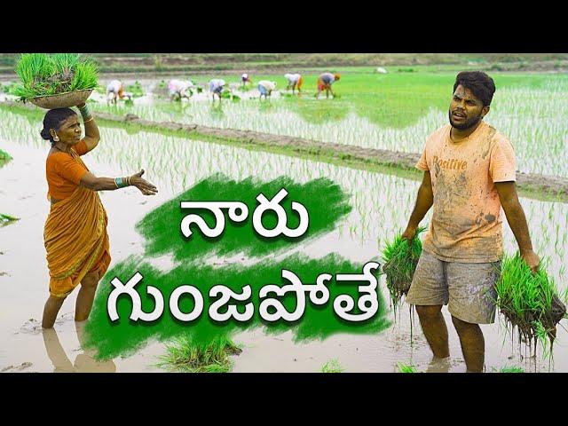 Village paddy farming | my village show sankranti special comedy
