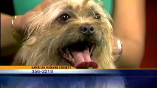 Pets On Set: Adopt Perci