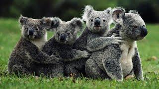 Дикая природа Австралии Maxvision
