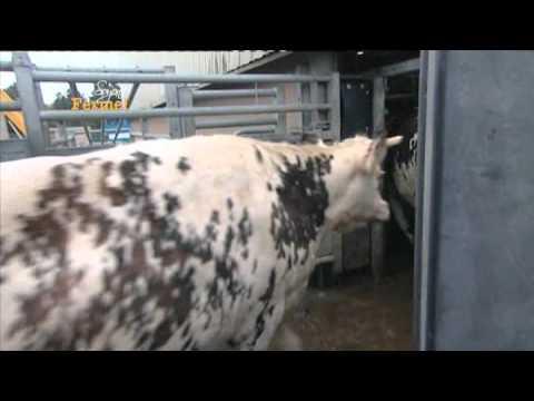 Comment la viande de b uf est contr l e youtube - Comment couper de la viande congelee ...