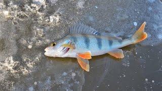 Зимняя рыбалка первый лед Открытие сезона 2019 2020