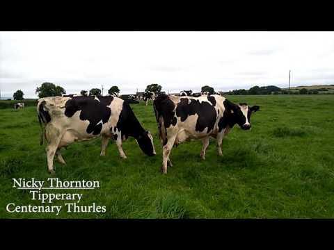 Milk Quality Awards 2016 - Nicky Thornton