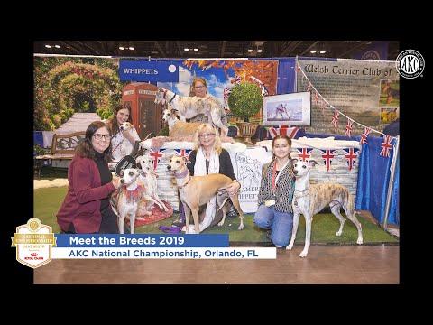 AKC National Championship Meet the Breeds 2019 Slideshow