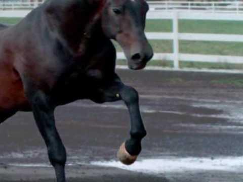 caballo golondrino vicente fernandez