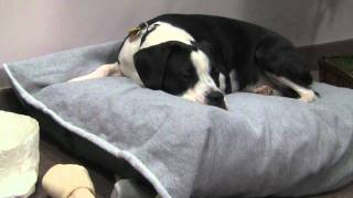 Pet Beds | Dog Bed | Cat Bed