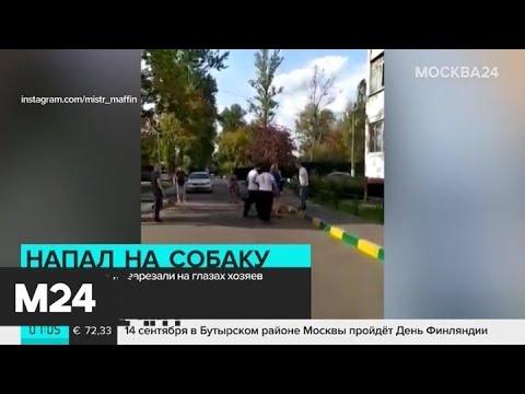 В Химках мужчина нанес ножевые ранения ротвейлеру - Москва 24