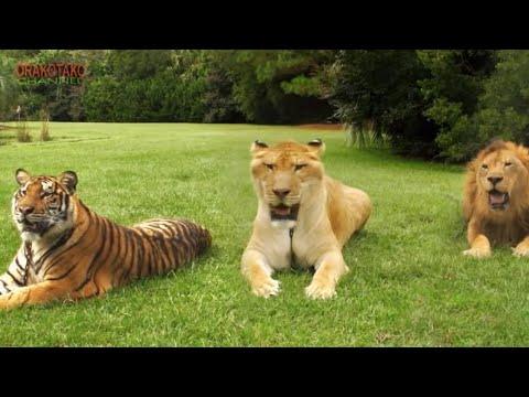 TOP 10 ANIMALES HÍBRIDOS MÁS INCREÍBLES DEL MUNDO