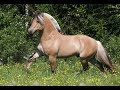 10 Horse Breeds You Won't Believe Actually Exist |10 Horse Breeds You Will Not Believe Exist 2018