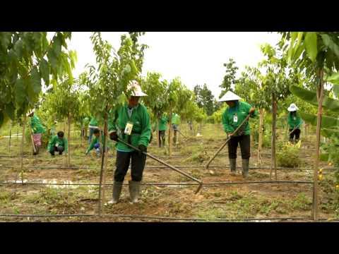 Daphne Iking: Sustainability, Renewability and Social Responsibility with Asia Plantation Capital
