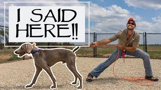 Teaching A Stubborn Dog To Come Guaranteed