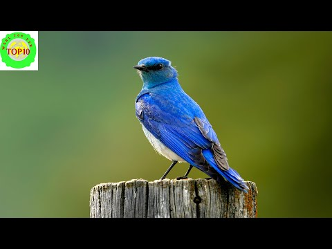 Top 15 Most Beautiful U S  State Birds